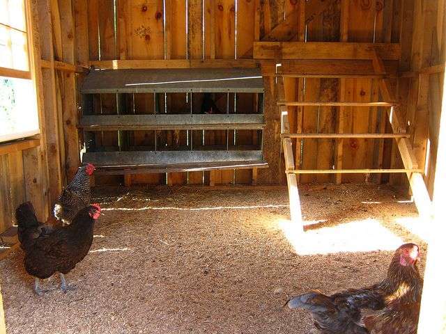 inside photos of chicken coops 3