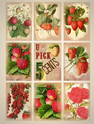 gorgeous free printable tags and scrapbooking images: Vintage Strawberries and berries, u pick, red