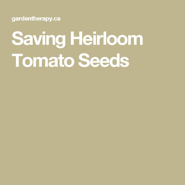 Saving Heirloom Tomato Seeds