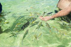 Os peixes coloridos das Galés de Maragogi, no Alagoas. Saiba mais >>> http://www.guiaviagensbrasil.com/blog/gales-de-maragogi-alagoas/