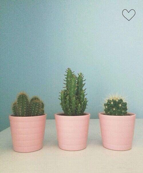 #miupi #adoromiupi #green #greenlife #suculentas #cactos #cactus #pink #goodtime #garden #plants #jardim #jardinagem