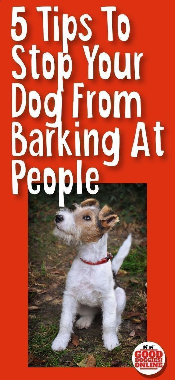 Pet Training If Your Dog Barks At Everyone Check Out These 5