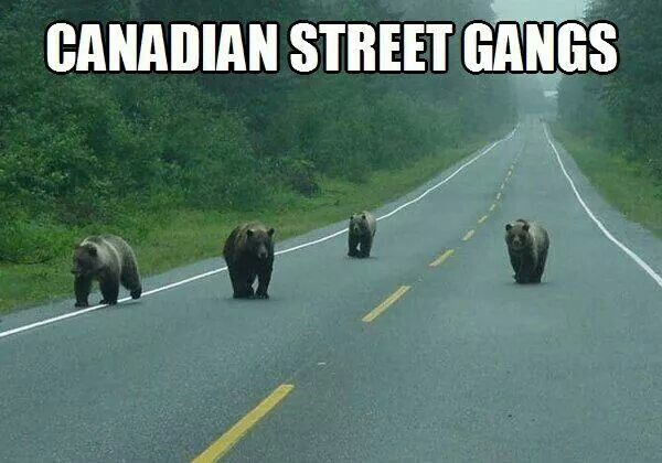 CANADIAN STREET GANGS‼‼‼
