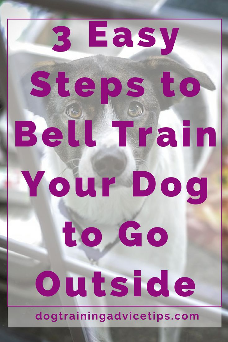3 Steps to Bell Train Your Dog to Go Outside | Dog Training Tips | Dog Obedience Training | Dog Training Commands |
