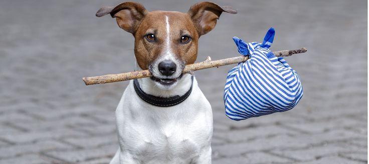 """Dal 29 Dicembre 2014 è entrato in vigore il nuovo regolamento inerente la """"movimentazione a carattere non commerciale di animali da compagnia"""" che abroga l'intera normativa precedente."""
