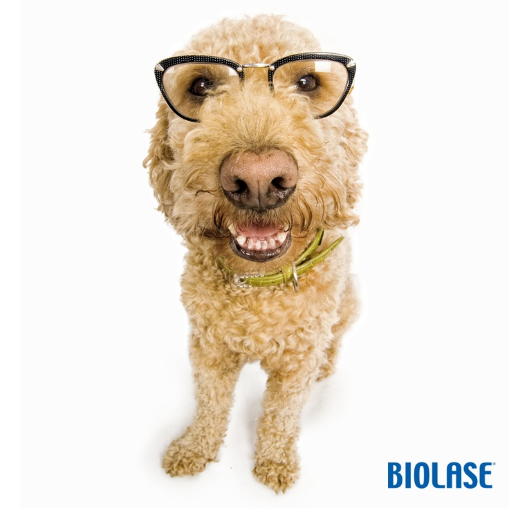 Symptoms Of Gum Disease In Dogs Include Yellow And Brown