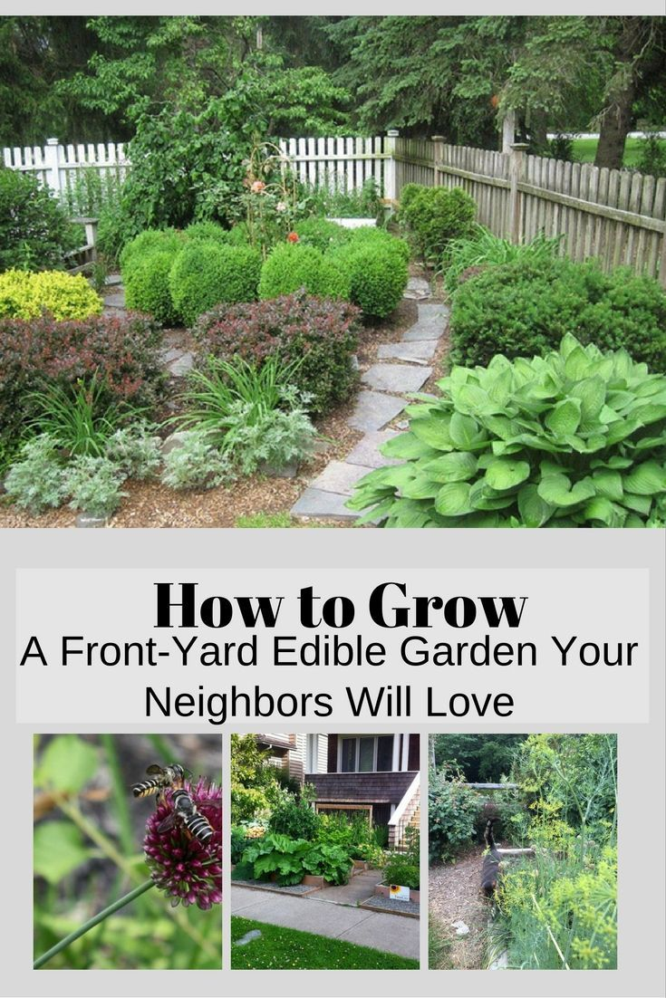 How To Grow A Front Yard Edible Garden Your Neighbors Will Love