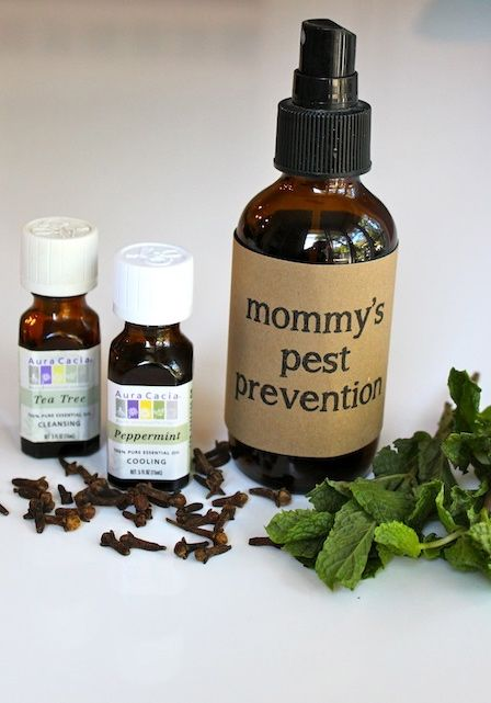Homemade Pest Prevention: keep the kids lice-free with this all-natural spray