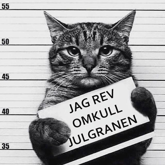 Sällan lätt när det är svårt nej faktiskt inte haft någon iår. #julevent #juldekor #julgran #julgranskulor #instastockholm #instasweden #instagay #instahomo #katt #katter #dekor #husdjur #skylig