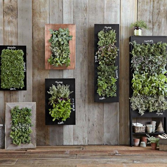 Vertical Microgreen Planter - aka edible plants and herbs. Hanging from your wall. This is genius!
