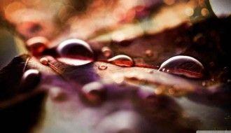 Rain Drop Wallpaper HD Natural Leaf 1366x768px Resolution