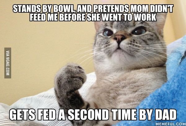 Success Cat eats well. This is my cat for sure.