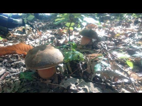 boletus mushroom medley relaxing - YouTube