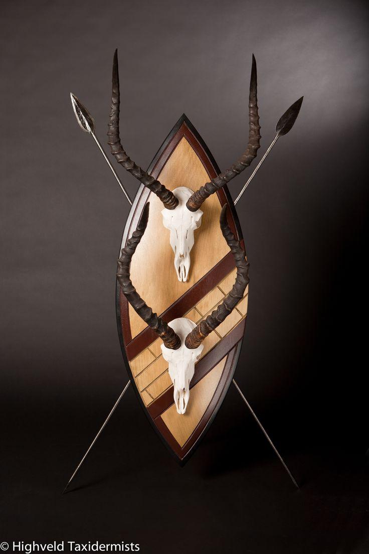 Gun room amp trophy room done hunting - Impala Skulls On Zulu Shield Highveldtaxidermists Taxidermyart Taxidermy Euro Mountsafrican Roomeuropean Mounttrophy