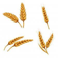 Resultado de imagen para imagenes de trigo y caliz png