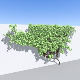 ivy 3D Object | FREE Artlantis Objects Download