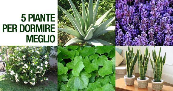 Oltre 25 fantastiche idee su piante di cactus su pinterest - Piante in camera ...