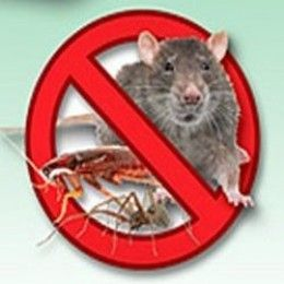 Pest Control and getting rid of Mice naturally is a big problem all year round for millions of unlucky residents living in their homes...We find their little mouse droppings - and even their nests - in the pantry, drawers, and our storage room... ...