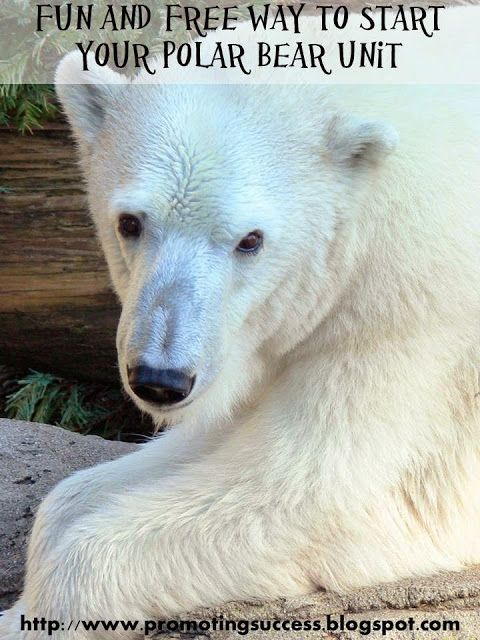Polar Bear Activities - A cute video to begin your polar bear winter thematic unit. REPIN this to check out this blog with TONS of FREE teaching ideas and resources!