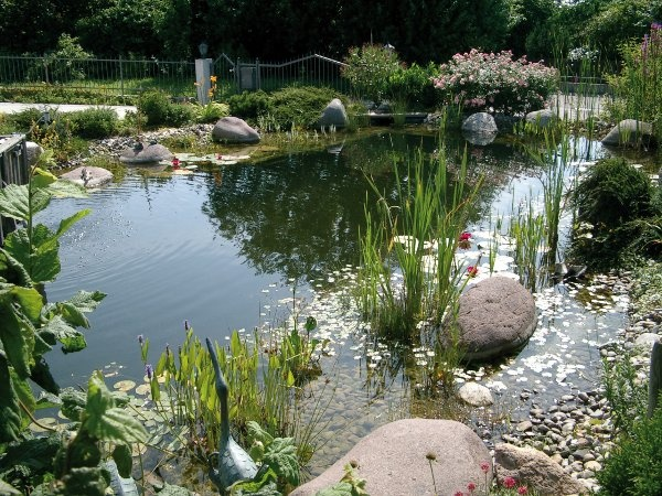 384 best images about natural pools on pinterest swim for Koi pond next to pool