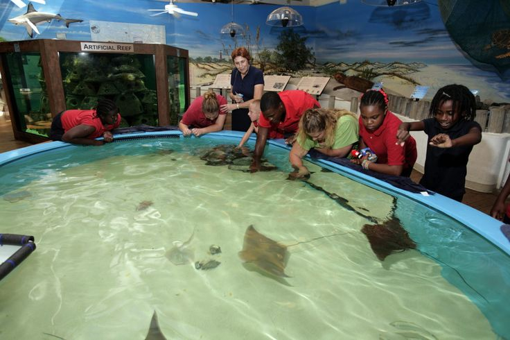 Things-to-do-in-Daytona-with-families-Marine-Science-Center