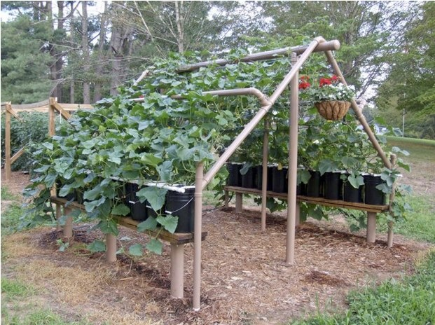 I like this trellis.  Seems like you could grow shade loving plants below it also (or pull up a chair and a good book!)    [believe the original came from pickapepper.com]