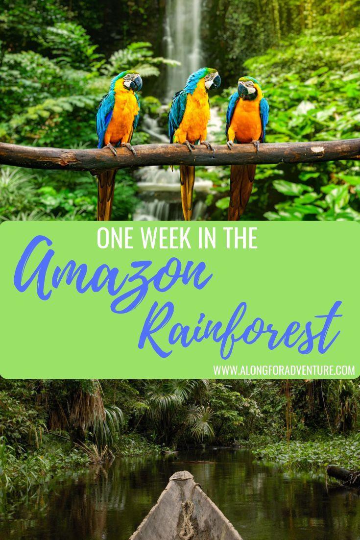 A Week In The Amazon Rainforest South America Travel Ecuador