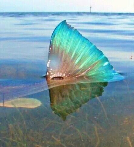 Redfish, Florida Keys  CHASIN TAIL   Salt Water Fishing Fly fishing in the Florida Keys ◉ re-pinned by http://www.waterfront-properties.com/jupiterrealestate.php