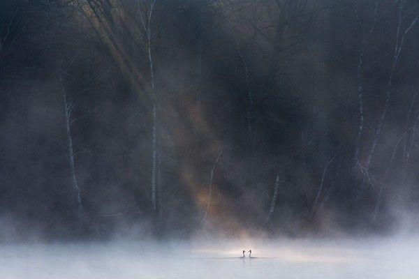 """Najlepsze zdjęcie w kategorii """"Dzika przyroda"""", fot. David Peskens"""