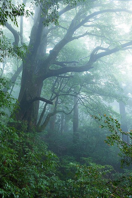 Another world, Yakushima Island