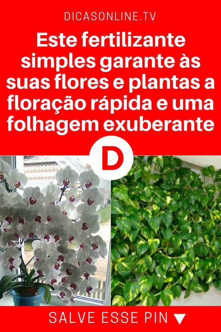 Fertilizantes caseros para plantas | Este fertilizante simples garante às suas flores e plantas a floração rápida e uma folhagem exuberante | Aprenda a fazer!