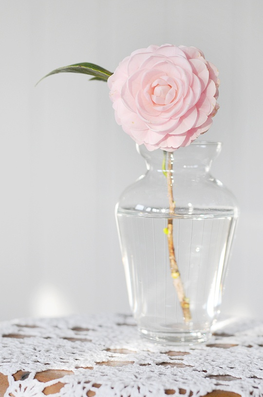 Lovely minimalistic composition in soft tones #camelia