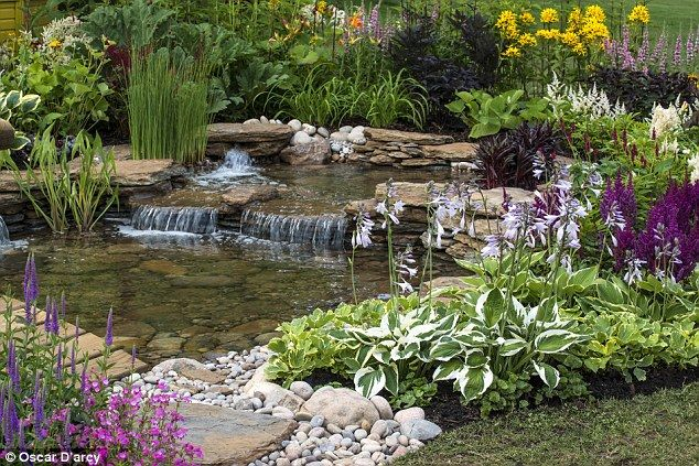 I just love this pond, the water falling... Tranquil: A pond large or tiny can be a haven for plants and garden wildlife