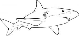 How to draw a shark step by step - Great tut!! Hundreds of different drawing tuts on this site