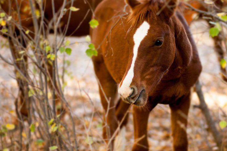 Horses of Nieu-Bethesda.  Image: © Sarina Engelbrecht