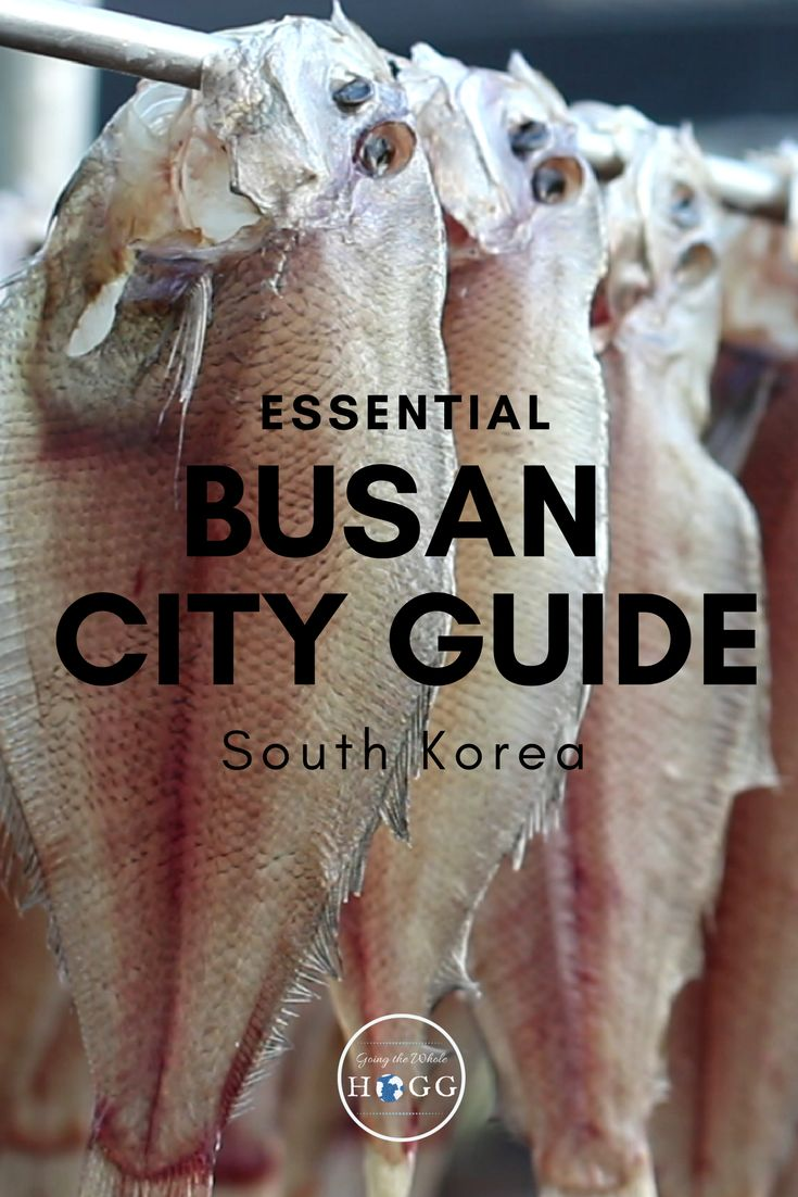 The Essential Busan City Guide, South Korea. What to see, do, eat & drink. Where to stay, how to get around, plus an interactive map to help you find it all. Beaches, hiking, shopping, quirky sights, temples, amazing seafood and buzzing nightlife - find out the best of Busan travel | South Korea Travel | Korea Travel | Backpacking Korea | Korea Beach | Korean Food | Hiking Korea | Korean Temples | East Asia Travel | Travel Tips | Travel Guides | City Guides #SouthKorea #TravelTips #Busan…