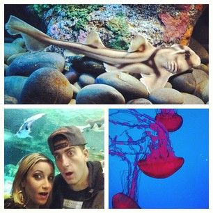 Jesse and Jeana went to the Toronto Aquarium today. Saw all kinds of dope fish and big sharks