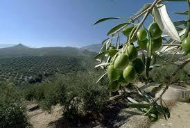 Casi la totalidad del paisaje agrícola lo ocupa el olivar, que con 22 millares de hectáreas labradas es capaz de ofrecer 1174 unidades de trabajo anuales  existiendo así una variedad de aceituna propia de la localidad, la picual o marteña.
