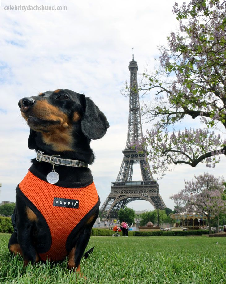 (Video) Watch The Best Vine Video Compilation Of Crusoe ...