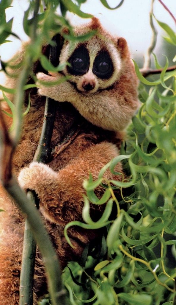 Cute animals that could kill you- Don't let their look fool you!