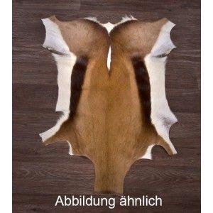 Tierpräparation Michael Dittert Fellhandel, Tierprodukte springbockfell 55,-