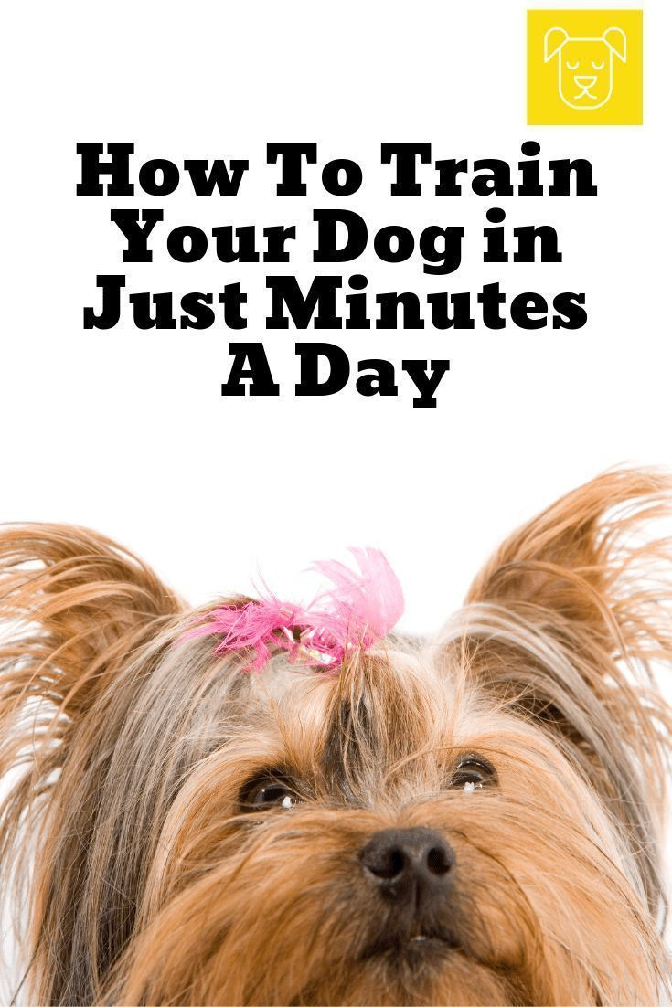 How To Train Your Dog In Just Minutes A Day Training Your Dog