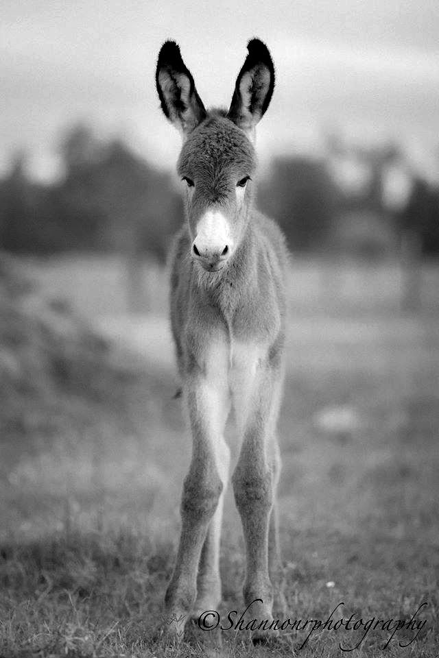 It's a boy!!!  Photo by Shannon Roy 6-19-50