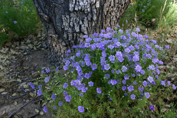 10 perennial flowers that thrive in compacted clay soil for Soil for plants