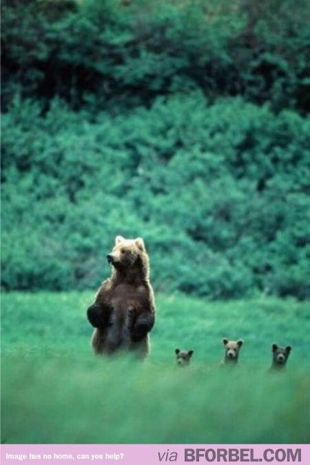 A Bear Family #adorable