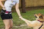 Cara Melatih Anjing. Tips cara melatih anjing peliharaan dengan mudah http://www.anjinglovers.com/cara-melatih-anjing/ #anjing #dog #pet #AnjingLovers #melatihanjing #pelatihananjing #caramelatihanjing #dogtraining