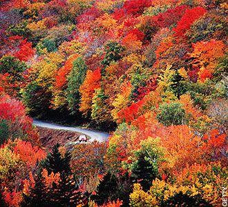 #lieberDschinni Nächstes Jahr würde ich diese herrliche Herbstpracht gerne selber genießen und mit den Blättern um die Bäume tanzen! Schenkst du mir und meinem liebsten eine Reise nach Nordamerika zum Indian Summer?
