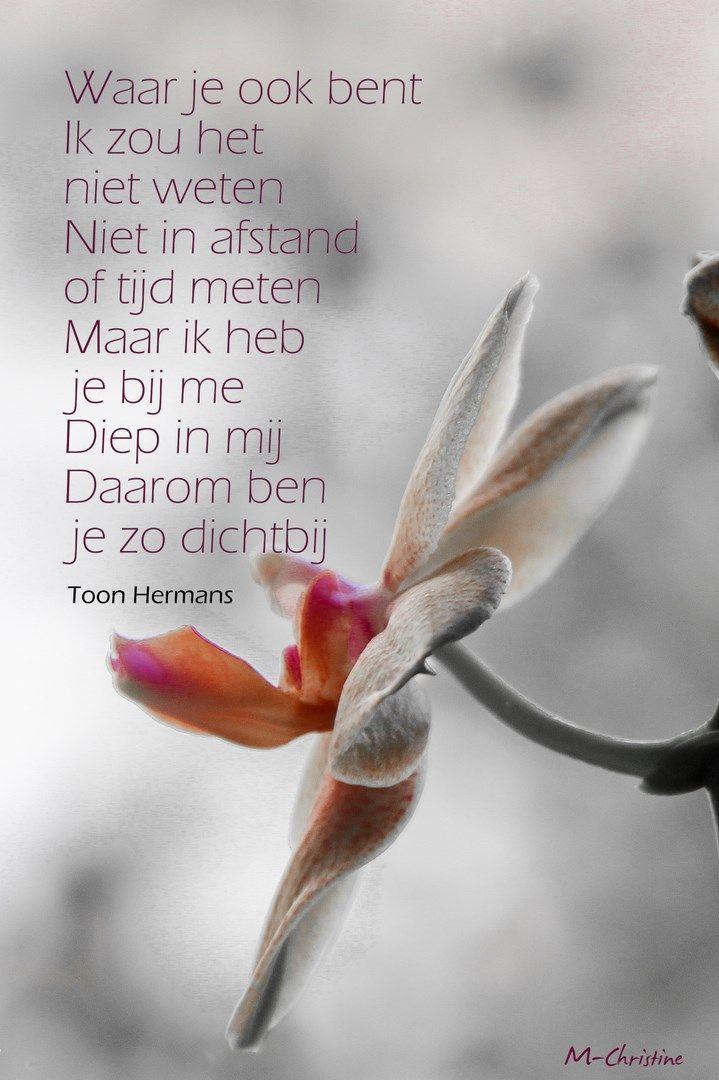 Toon Hermans>waar je ook bent:
