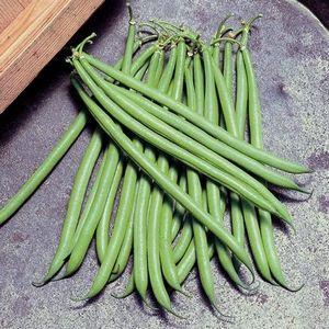 HARICOT NAIN Mangetout Slenderette (100 gr)