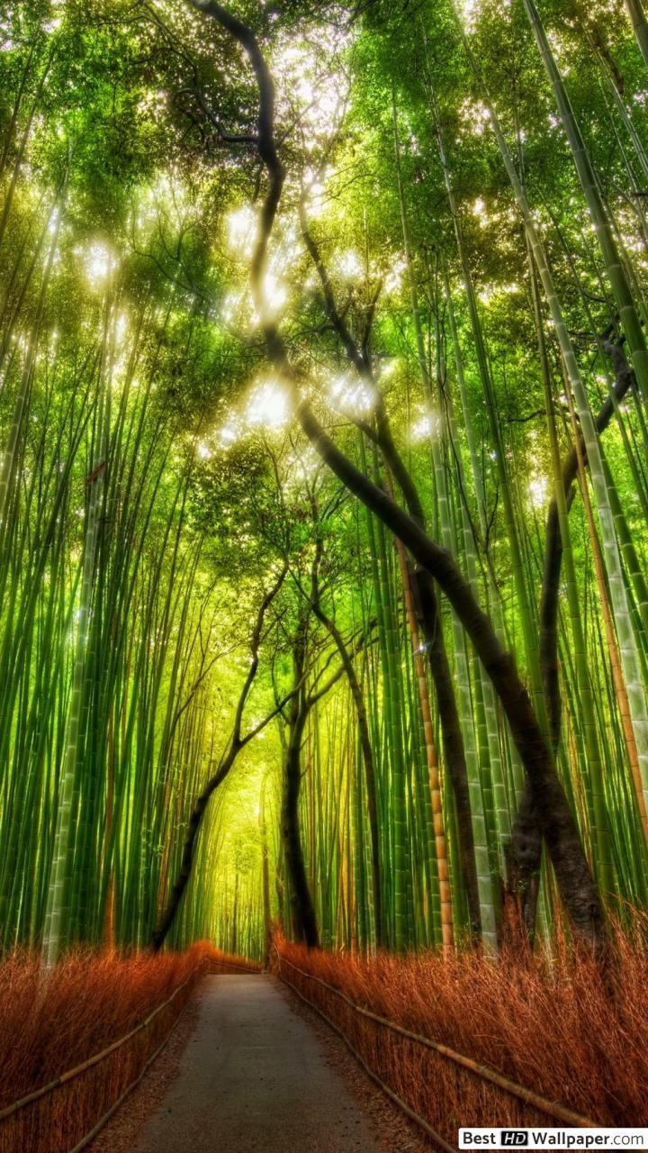 Forest Hd Wallpaper Android In 2020 Beautiful Nature Wallpaper Nature Wallpaper Beautiful Nature